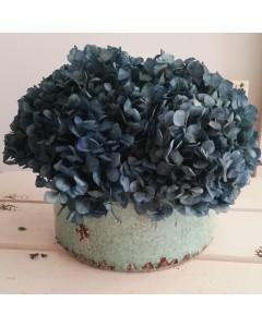 Centro Hortensias Blue