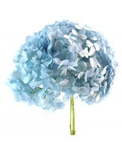 Hortensia Azul Pastel