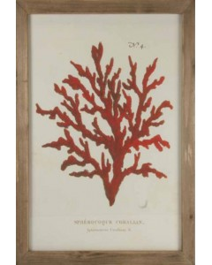 CUADRO CORAL RED
